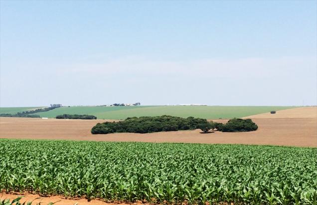 Enorme maïs- en tarwevelden op de lomba